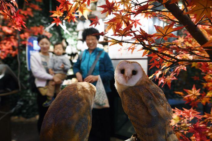 Кадры повседневной жизни японцев » Новости со всего мира,Интересные новости,Интересные факты,Новости России сегодня,.