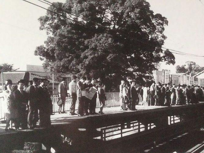 700-летнее дерево посреди железнодорожной станции в Осаке » Новости со всего мира,Интересные новости,Интересные факты,Новости России сегодня,.
