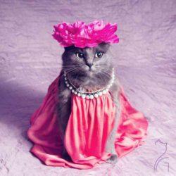 Невероятная удача -  кошка с улицы на модном дефиле » Новости со всего мира,Интересные новости,Интересные факты,Новости России сегодня,.