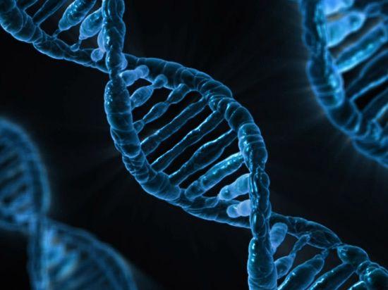 В Японии впервые вырастили кишечник из стволовых клеток