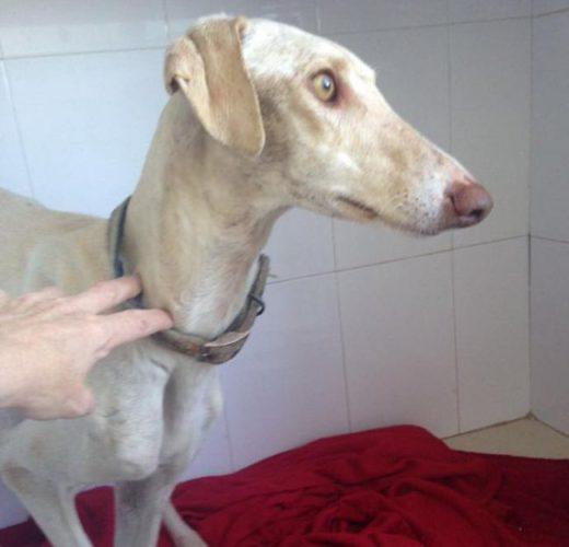 Собака со сломанной лапой показал ветеринарам путь к своим щенкам » Новости со всего мира,Интересные новости,Интересные факты,Новости России сегодня,.