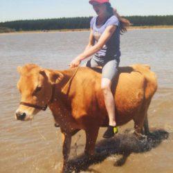 В Новой Зеландии девочка превратила корову в лошадь » Новости со всего мира,Интересные новости,Интересные факты,Новости России сегодня,.