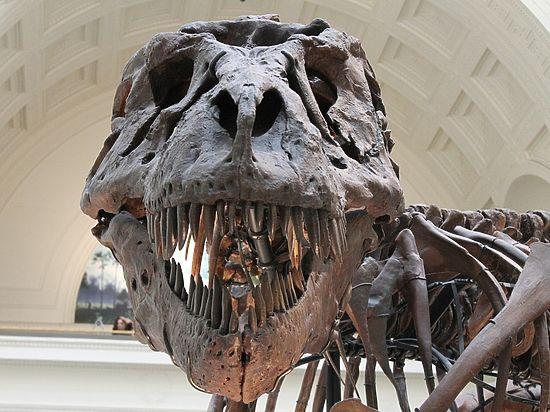 Палеонтологи обнаружили в Китае древнейший образец мягких тканей динозавра