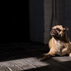 Зоологи обнаружили, что собаки презирают людей-эгоистов