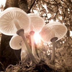 В Африке найден гриб, претендующий на звание древнейшего многоклеточного организма