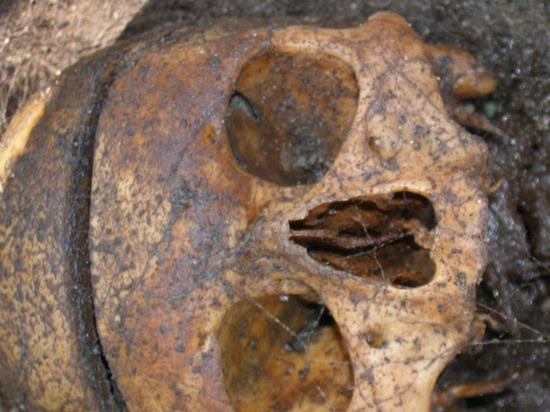 Ученые выяснили, чем питались солдаты наполеоновской армии