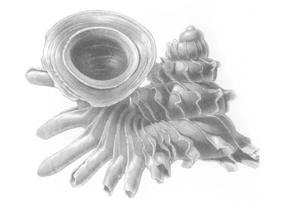 Российские ученые нашли во Вьетнаме таинственно светящихся моллюсков