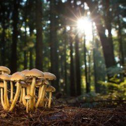 Российские биологи изобрели грибы, светящиеся всеми цветами радуги