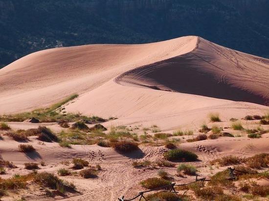 Глобальное потепление превратит Сахару в цветущий сад, считают климатологи