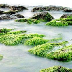 Люди оказались обязаны жизнью зеленым водорослям
