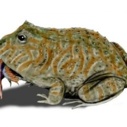 Лягушка, которая питалась динозаврами