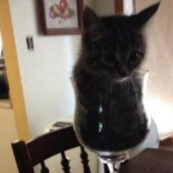 Шнобелевская премия: ветеринар объяснил, почему «жидкие кошки» - это серьезно