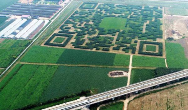 В Китае вырастили лабиринт формой QR-кода