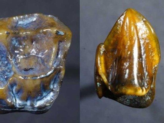 Находка немецких археологов заставляет переписать историю возникновения человечества
