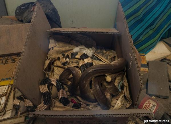 Канадец пытался отправить по почте змей под видом конфет