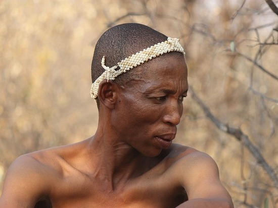 Лучшим средством контрацепции объявлен яд, которым смазывали стрелы африканские охотники