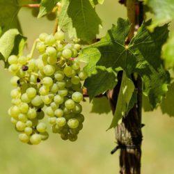 В Китае нашли вино двухтысячелетней выдержки