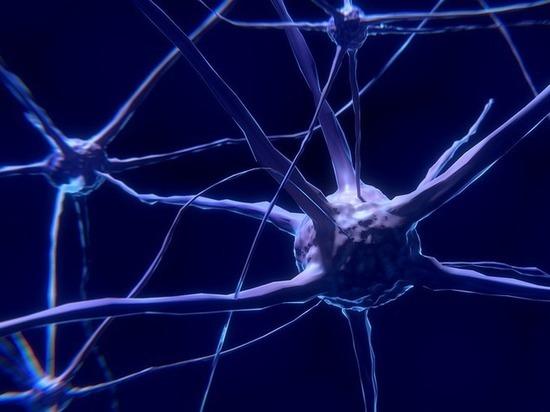 Клетки мозга человека восстанавливаются даже в старости