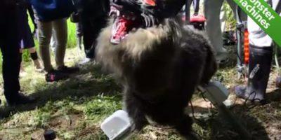 Машины-монстры: Робот-волк, который отпугивает диких кабанов от сельскохозяйственных угодий в Японии