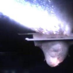 """Эксперимент с высокоскоростной """"пушкой"""" подтвердил, что вода на Земле появилась, благодаря астероидам"""