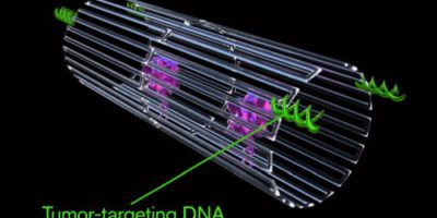Запрограммированные должным образом нанороботы из ДНК-оригами успешно борются с раковыми опухолями