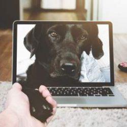 Хакеры массово взламывают гаджеты для животных