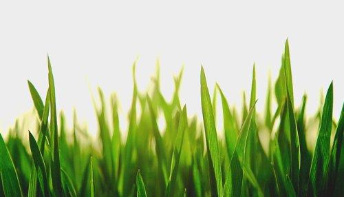 Ученые обнаружили принципиально новый вид фотосинтеза