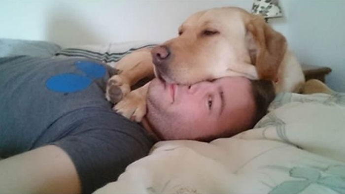 Собаки, которым наплевать на личное пространство других » Новости со всего мира,Интересные новости,Интересные факты,Новости России сегодня,.