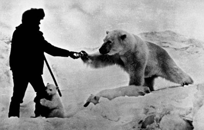 Бесстрашный полярник подкармливает белых медведей » Новости со всего мира,Интересные новости,Интересные факты,Новости России сегодня,.