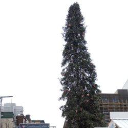 Вместо самой высокой елки в Монреале установили самую уродливую елку » Новости со всего мира,Интересные новости,Интересные факты,Новости России сегодня,.
