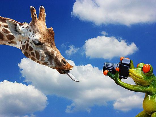 Жирафы могут исчезнуть с лица Земли до конца века