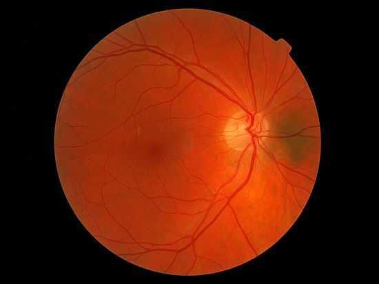 Российские ученые вырастили сетчатку глаза из клеток кожи