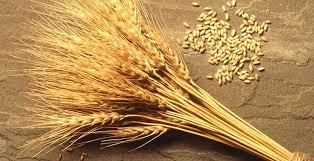 Зерно в Марокко