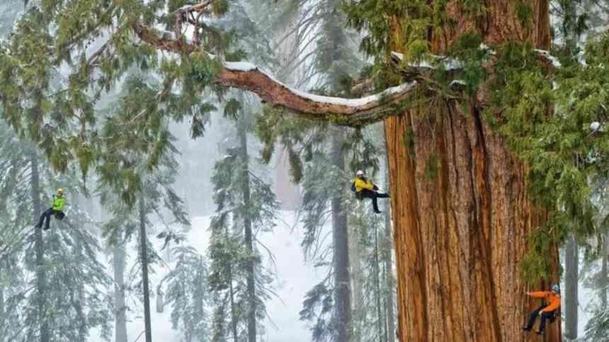 Самое старое дерево на планете по прозвищу Президент » Новости со всего мира,Интересные новости,Интересные факты,Новости России сегодня,.