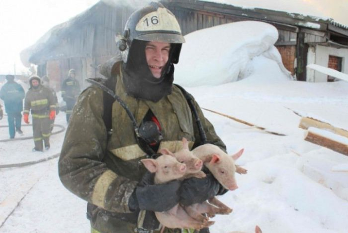 Томские пожарные вытащили более ста поросят из горящего свинарника » Новости со всего мира,Интересные новости,Интересные факты,Новости России сегодня,.