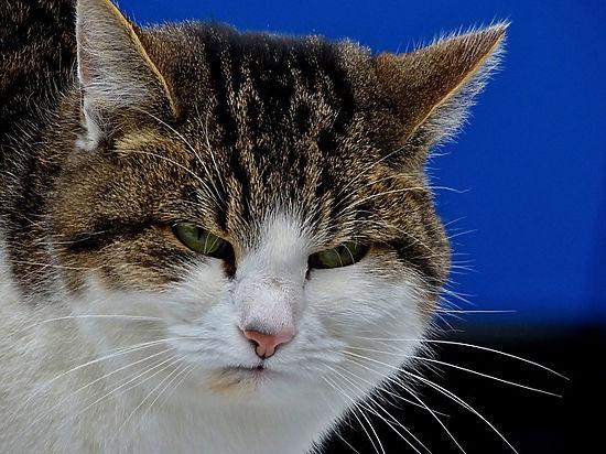 Научно доказано, что кошки еще умнее, чем кажутся