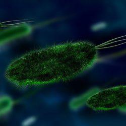 Ученые объяснили, как поведением человека управляют паразиты