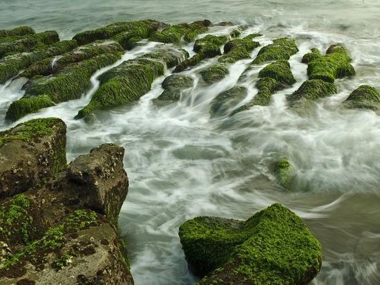 Обнаружены останки древнейшего на Земле растения