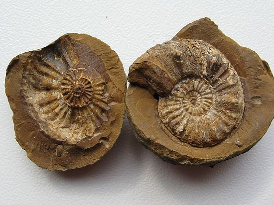 Палеонтологи заявили, что обнаружили древнейшие на Земле останки живых организмов