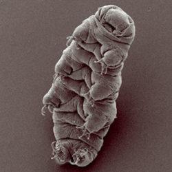 Биологи разгадали секрет самых выносливых существ на Земле