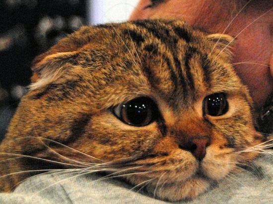 Ученые объявили эгоизм кошек мифом