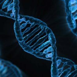 Открыт ген, замедляющий старение мозга на десятки лет