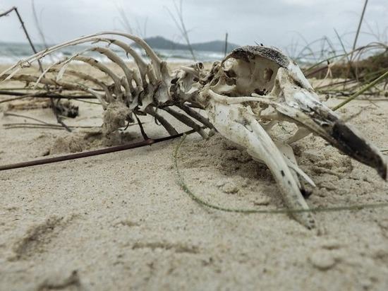В Новой Зеландии найдены останки древнейшего гигантского пингвина