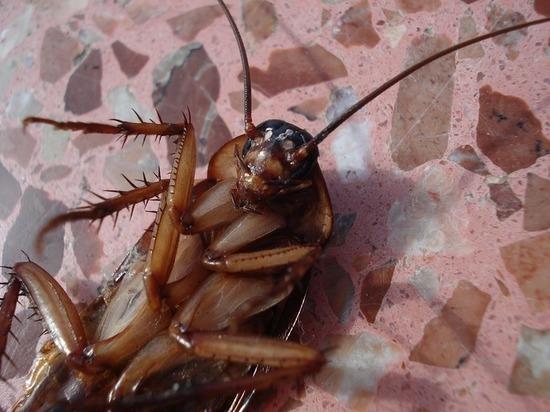 Во Вьетнаме откопали таракана в шлеме
