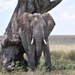 Биологи: в дикой природе слонам хватает двух часов, чтобы выспаться