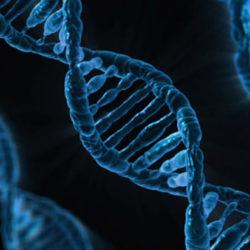 Определены продукты, которые замедляют старение на уровне ДНК
