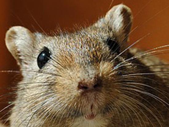 В Сибири обнаружены останки неизвестного науке зверя