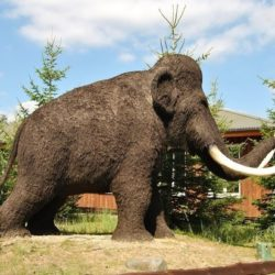 Палеонтологи выявили у людей и мамонтов схожие болезни