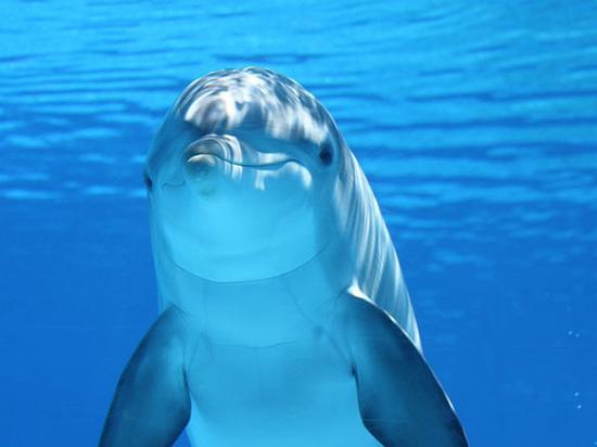 Мертвые дельфины в Новороссийске могли стать жертвами вируса