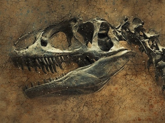 Найден зуб динозавра, переворачивающий представления об истории Земли